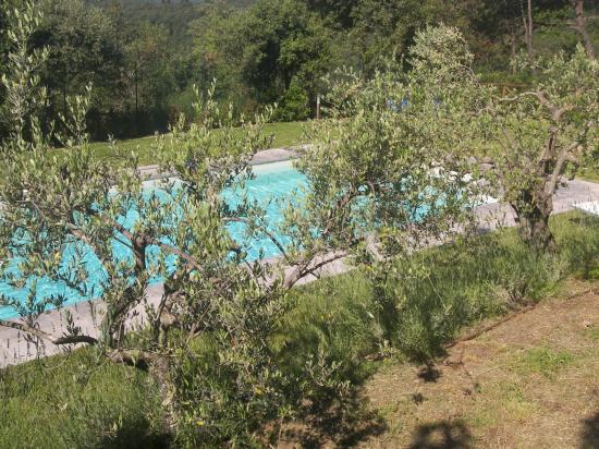 piscine sous les oliviers